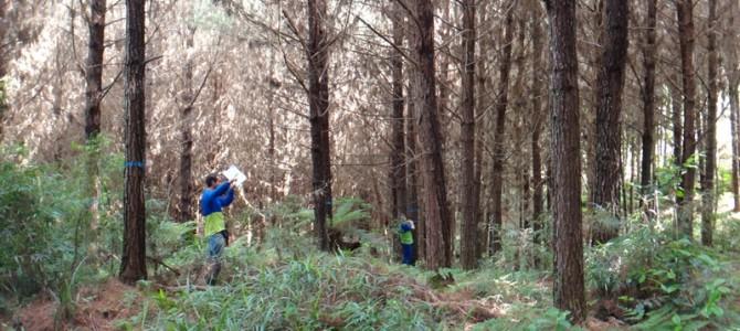 Investir em florestas plantadas